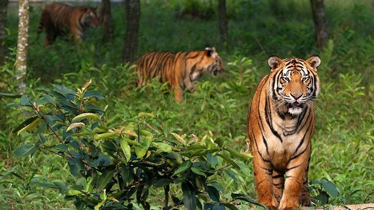 সুন্দরবন : 'বিপদাপন্ন বিশ্ব ঐতিহ্য' হিসেবে তালিকাভুক্তির সুপারিশ